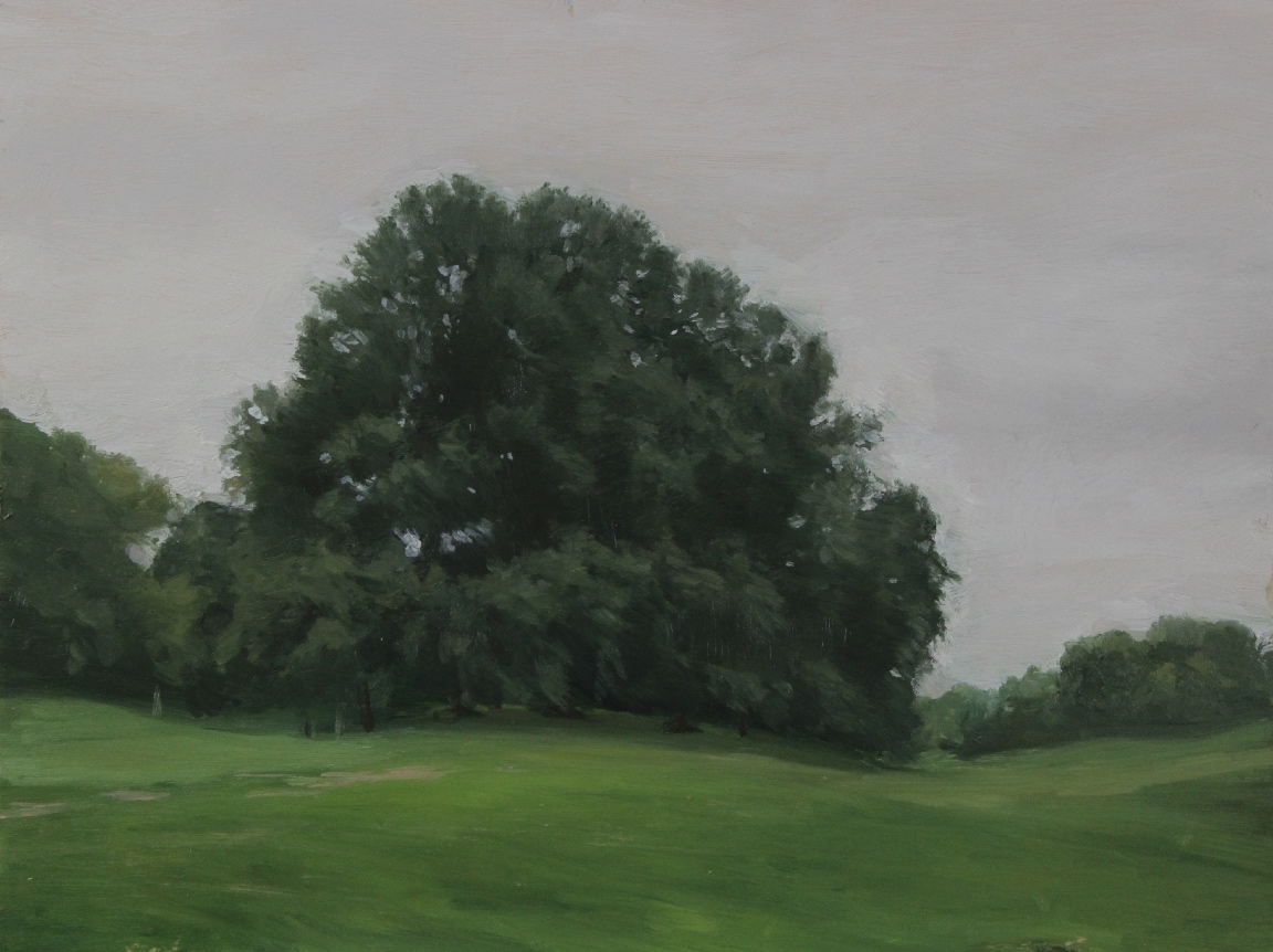 Tree Study, Prospect Park