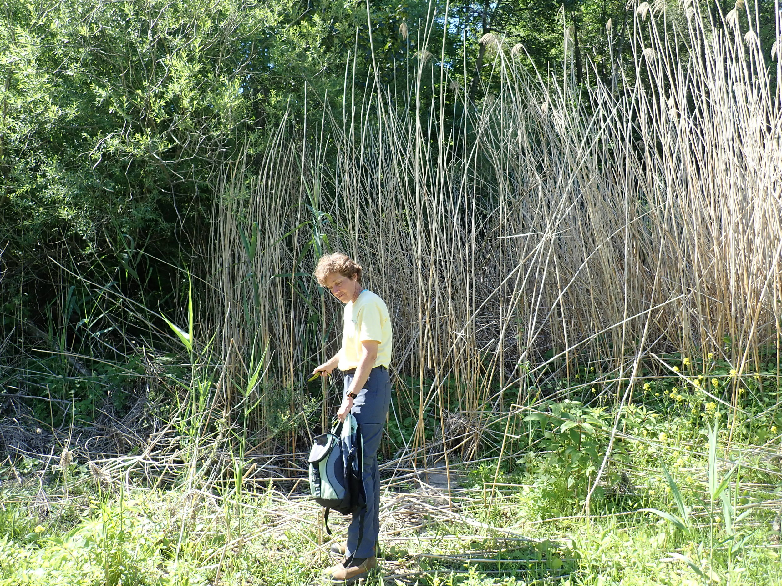 Dr. Gilbert surveying a site previously sprayed with herbicide.