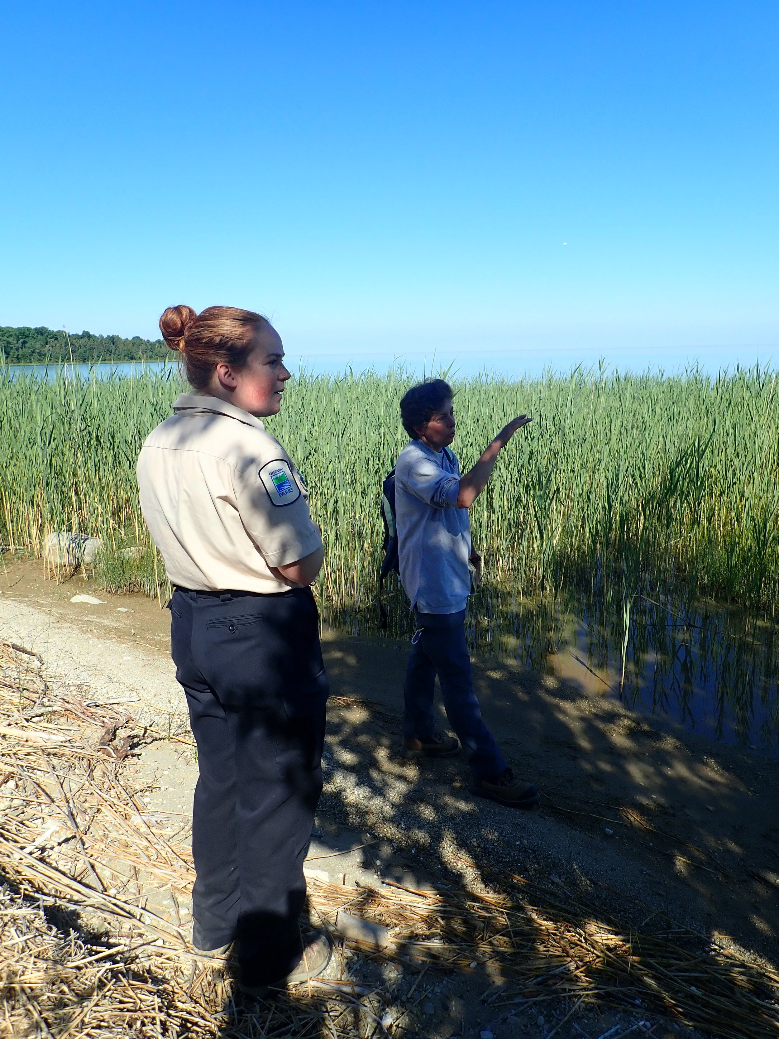 Dr. Gilbert and Natural Heritage Educator Kathleen Houlahan survey a shallow Phragmites site at MacGregor Provincial Park.