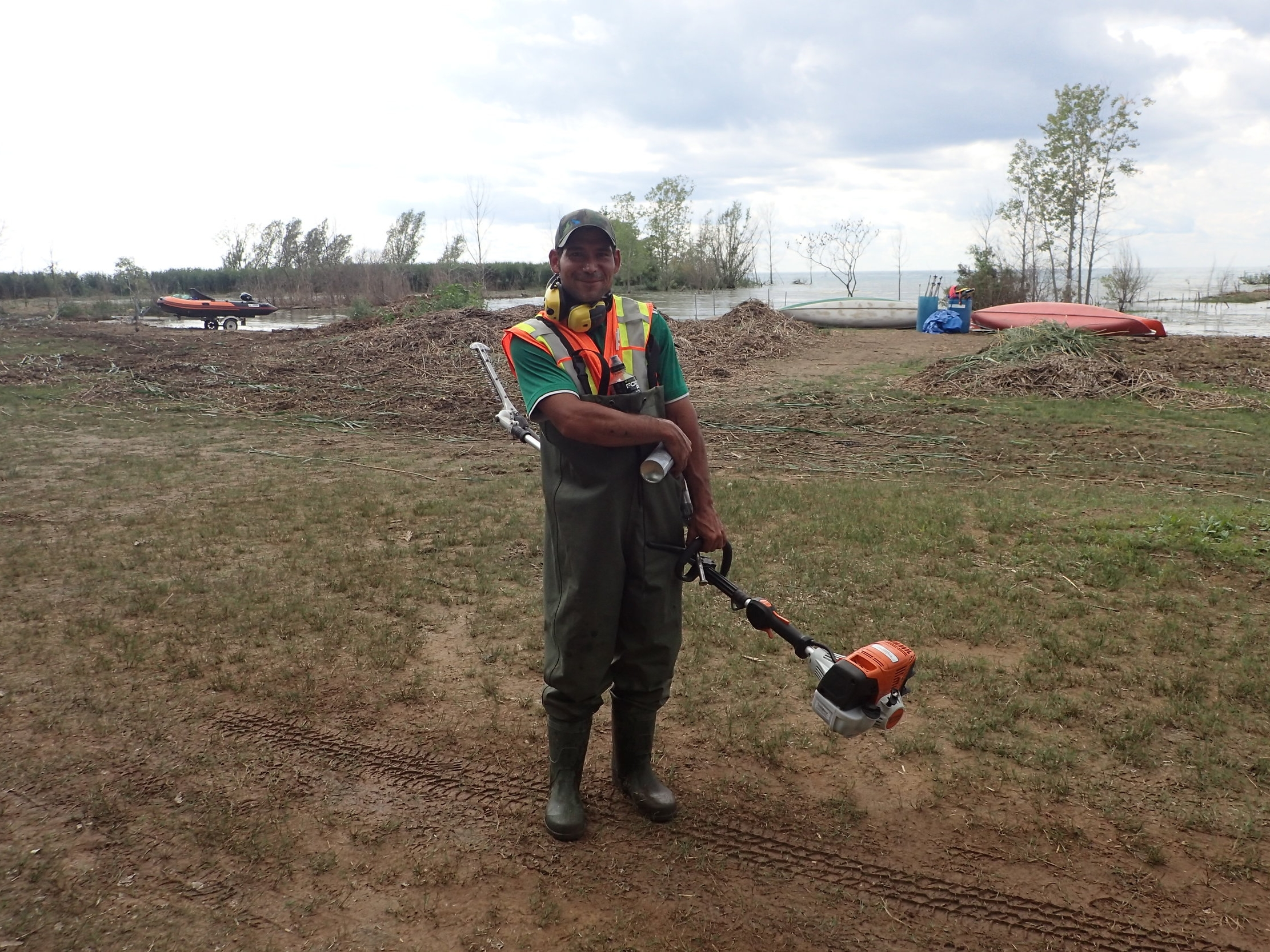 Josh takes a breather after cutting  Phragmites  with a STIHL saw at Lambton Centre
