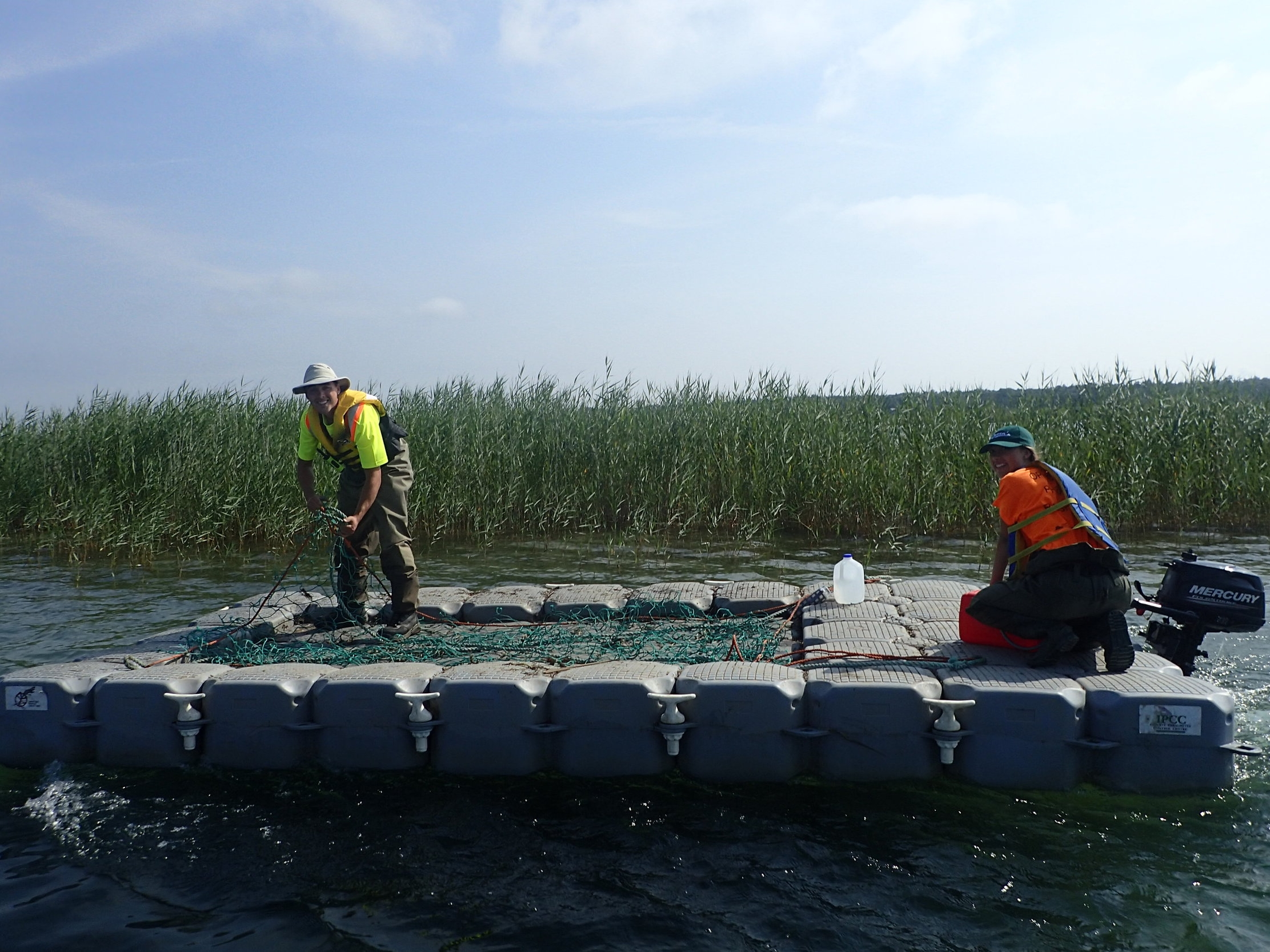 A collection barge is piloted to be used to collect  Phragmites .