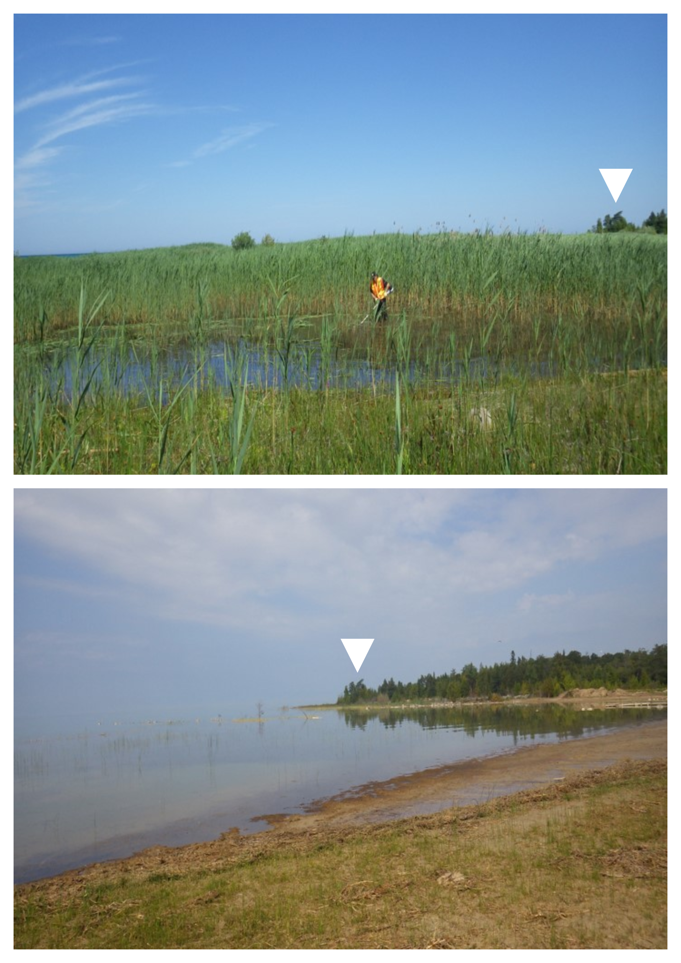 Before and after photos at the Brucedale Conservation Authority campground. White triangles show landmark markers.