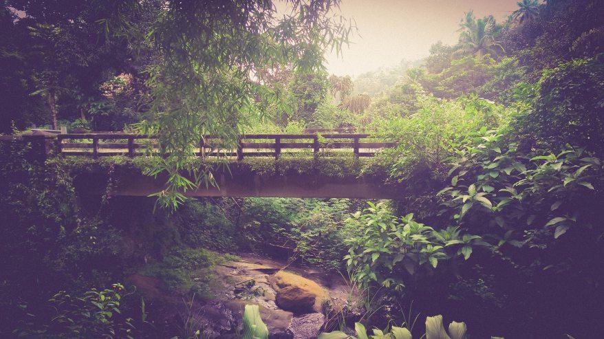 bridge-dawn-environment-288164.jpg