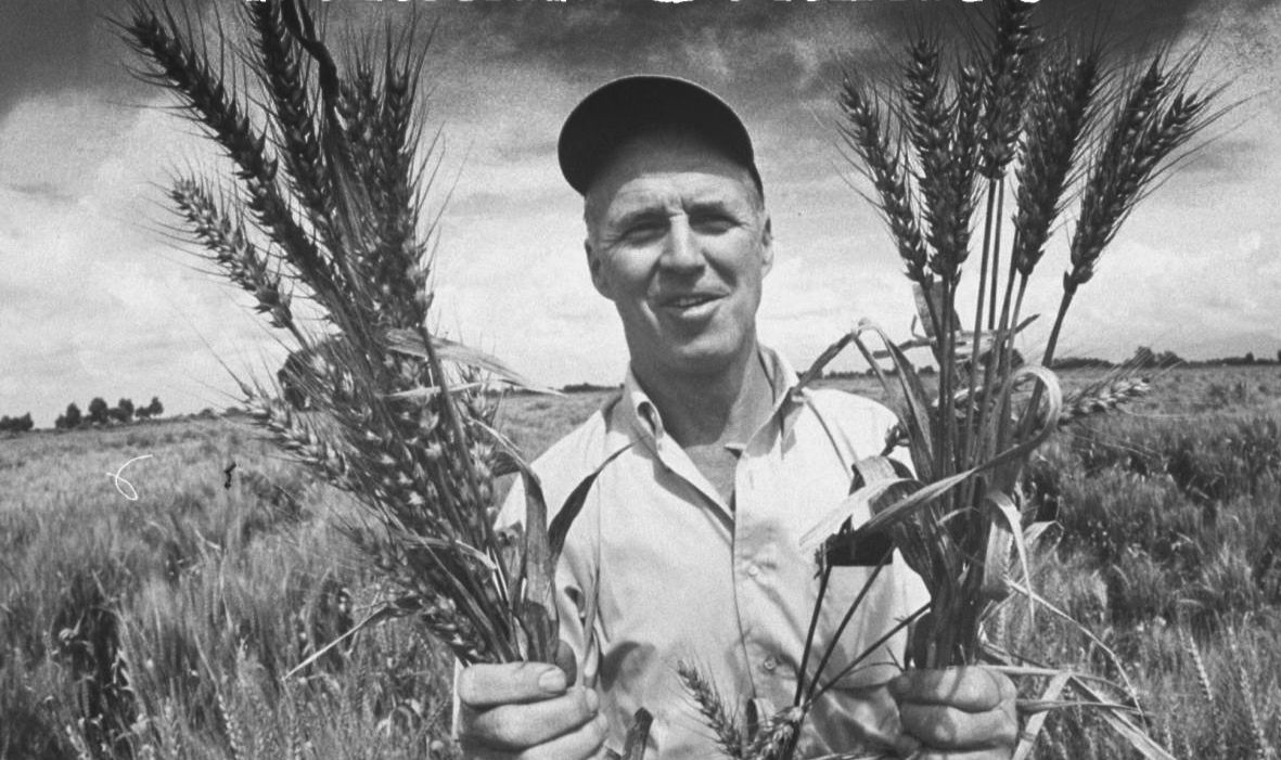 "Norman Borlaug, the ""Wizard"""
