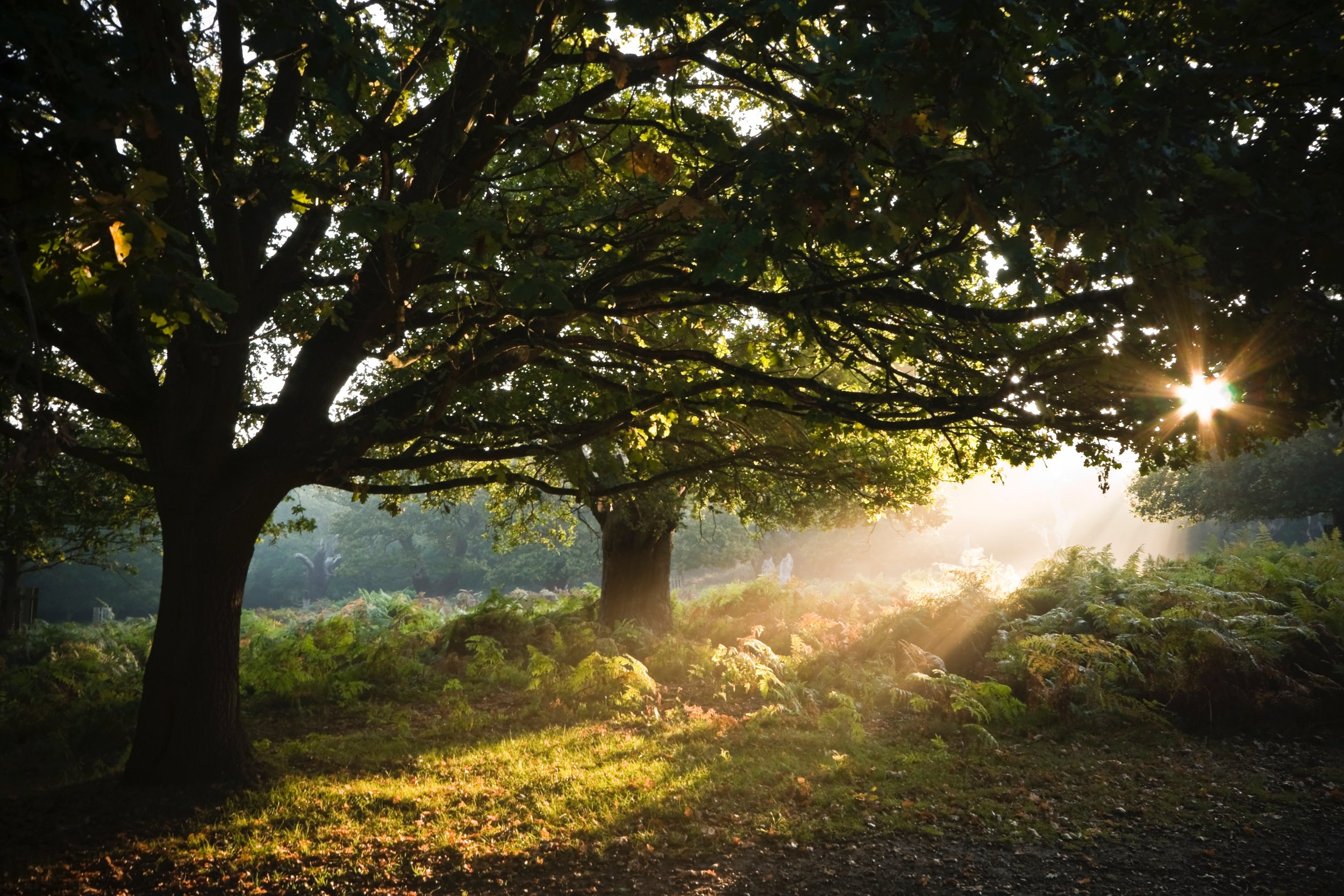 bright-dawn-daylight-1659689.jpg