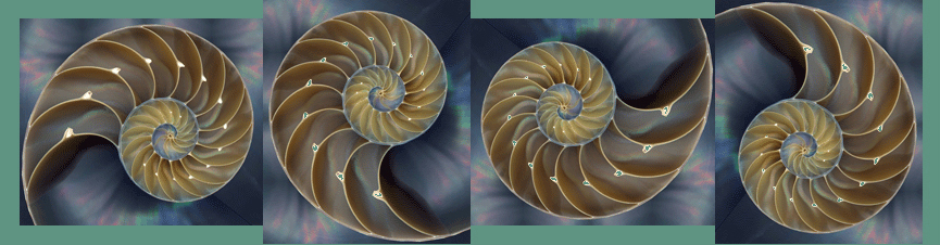 nautilus-shell-c.jpg