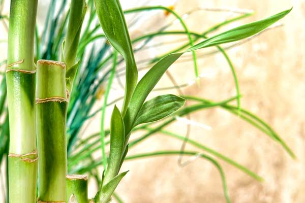 Bamboo with Grass on tan background
