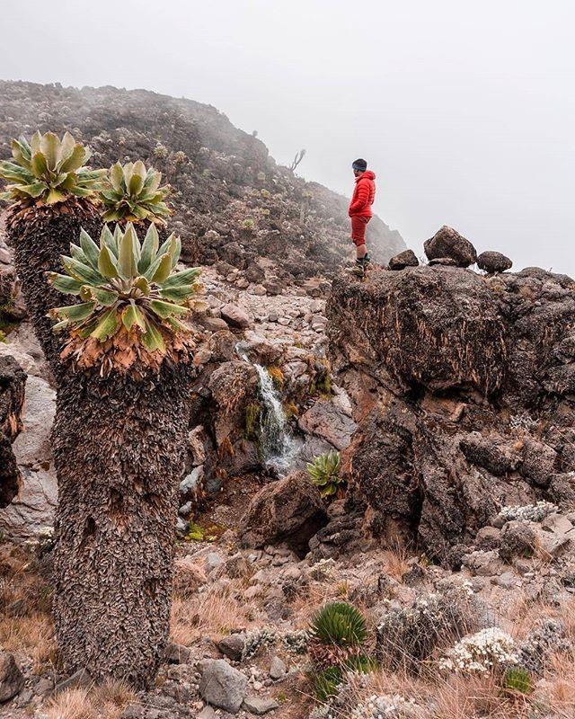 #Kilimanjaro #PhotoOfTheDay goes to @christinexploring @indragramm