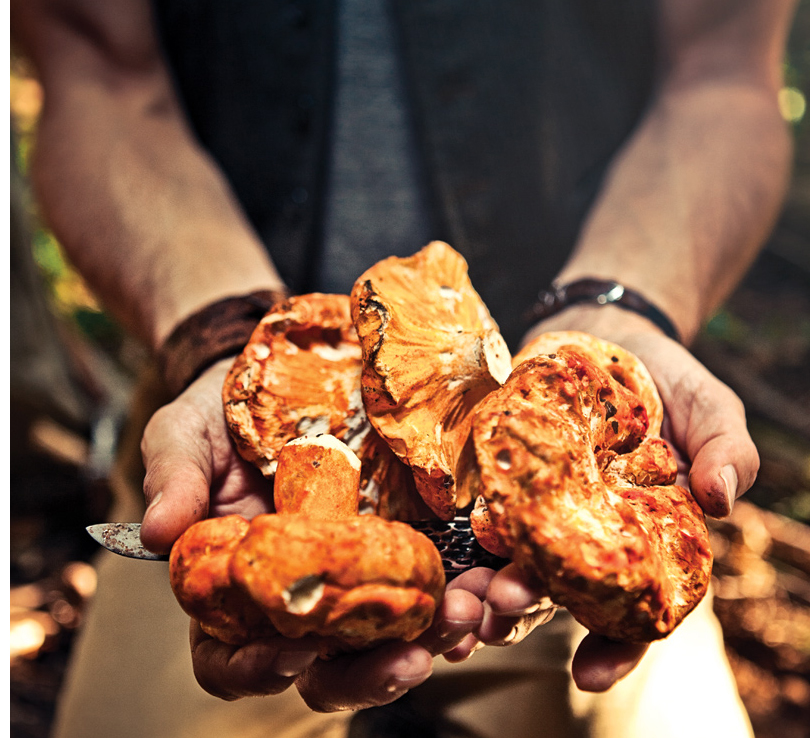 PROFILE:    Treasure Hunter    Top chefs are turning to the forest, not the farmer, for specialty ingredients that range from chanterelles to wild lemongrass—and Tyler Gray of Mikuni Wild Harvest is happy to give it to them.