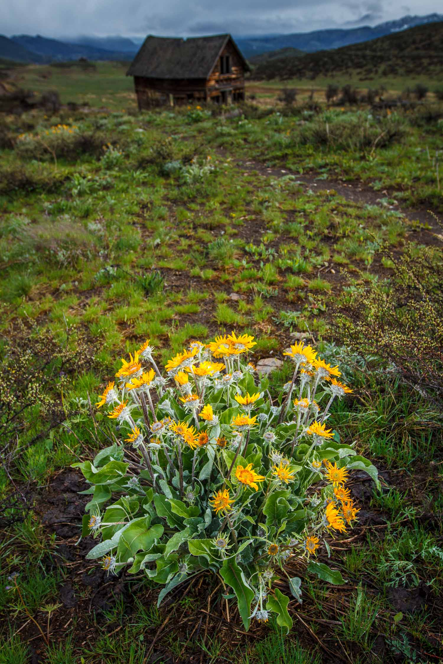 Methow-Valley-Learn-Photography.jpg
