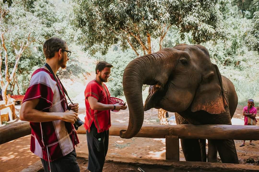 Feeding elephants bananas at Toto's Elephant Sanctuary