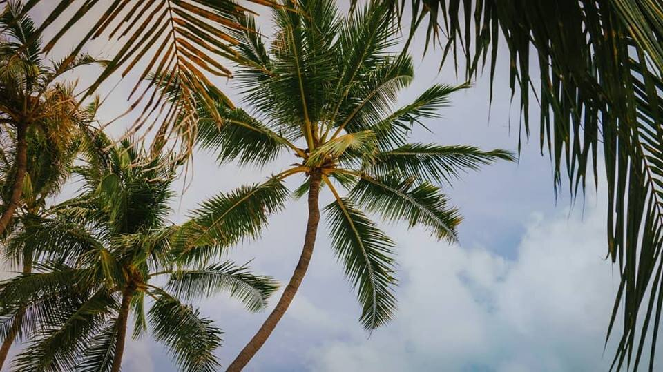 Cool breeze in Bohol, Philippines