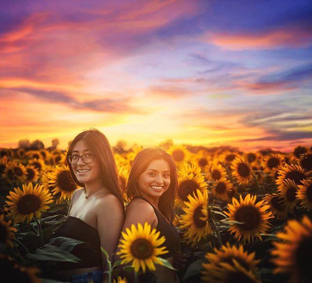 Sissy Swag! ❤️❤️ #shootmedash #sunflowers #sunflower #agricentersunflowers #agricenterinternational #photographerinmemphis #photographerincollierville #portraitphotography #sisterlove