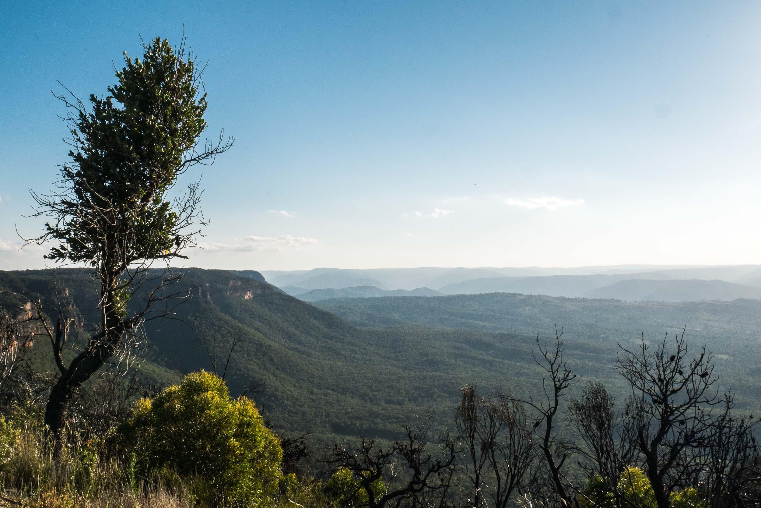 Blue Mountains-5.jpg