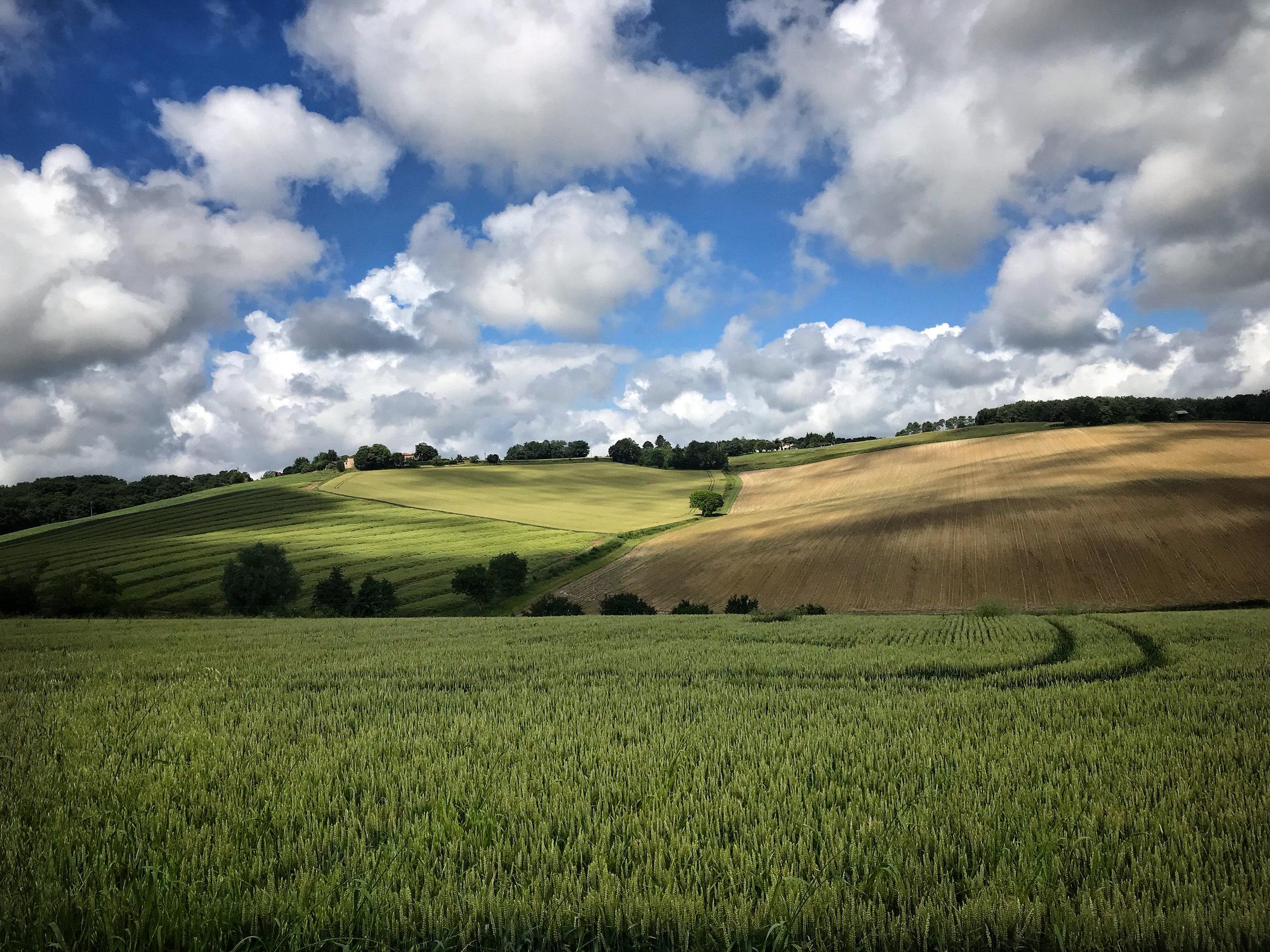 clouds & wheat Plus.jpg
