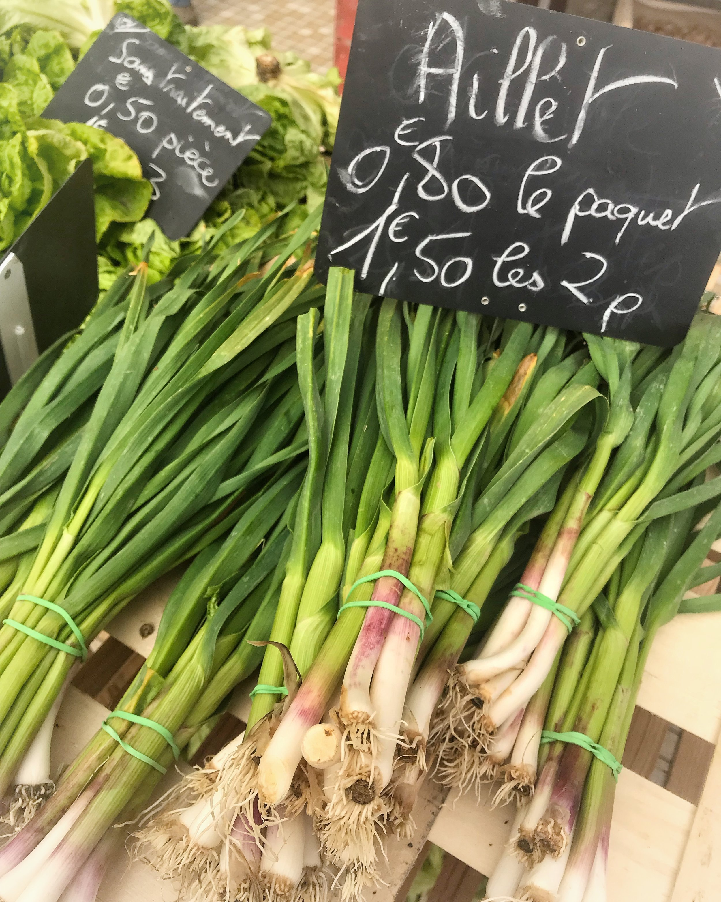 Fresh Spring Garlic Shoots-  Aillets
