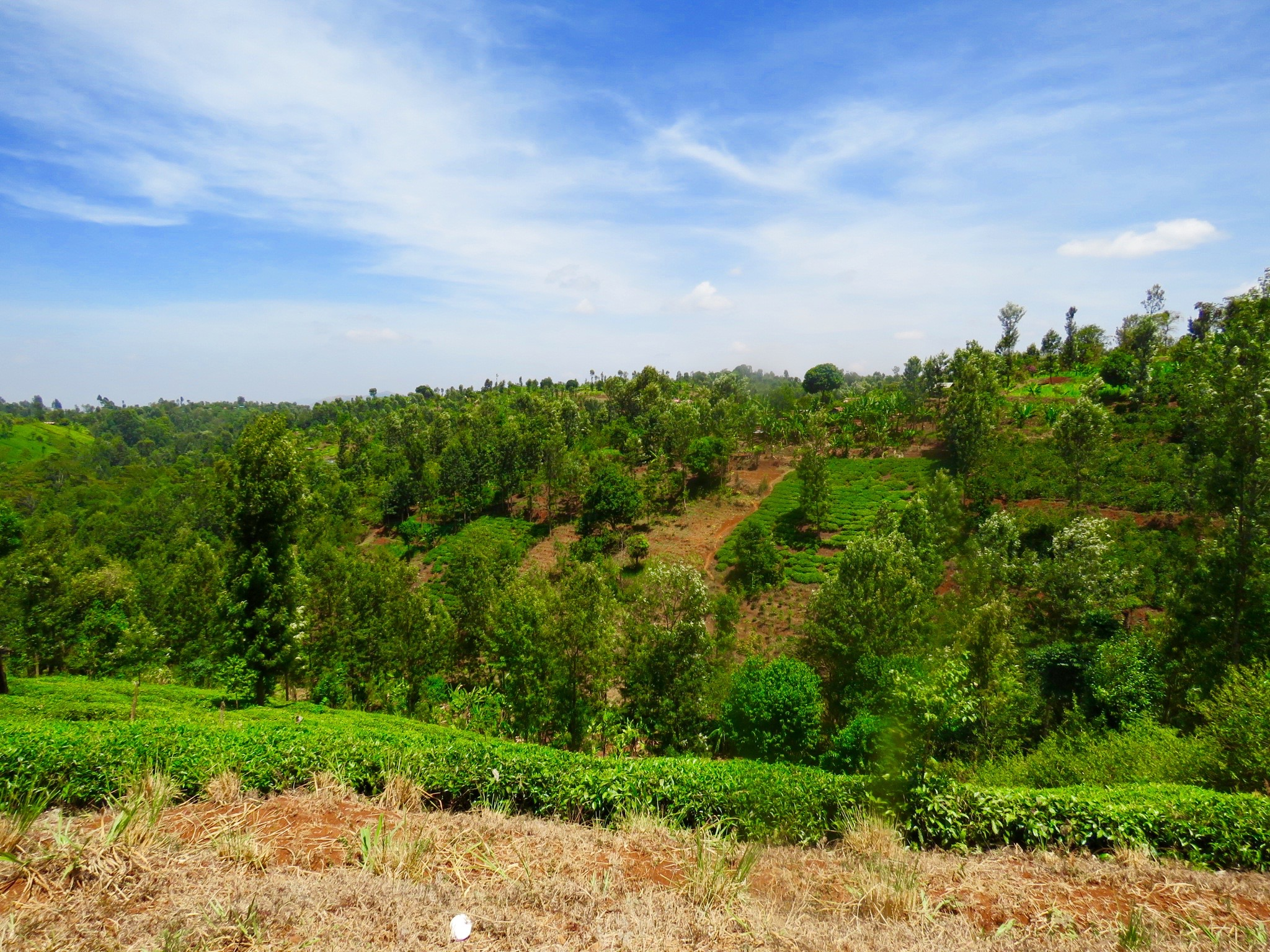 A typical scene of the lush farmlands set on the slopes of Chogoria