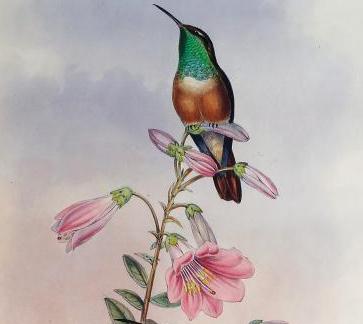 Ornithological