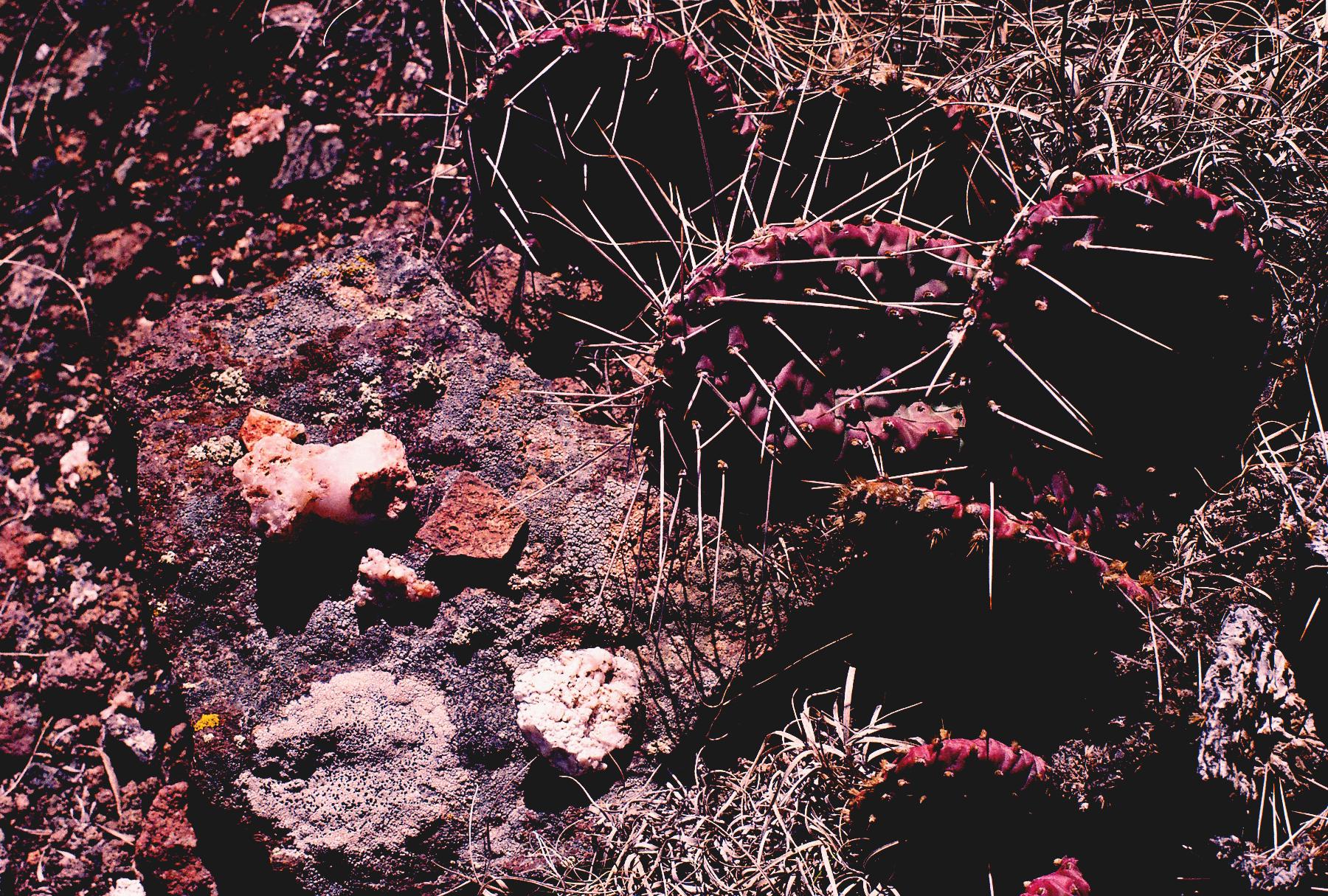 MintFresca-LunarNodes_Cacti.jpg