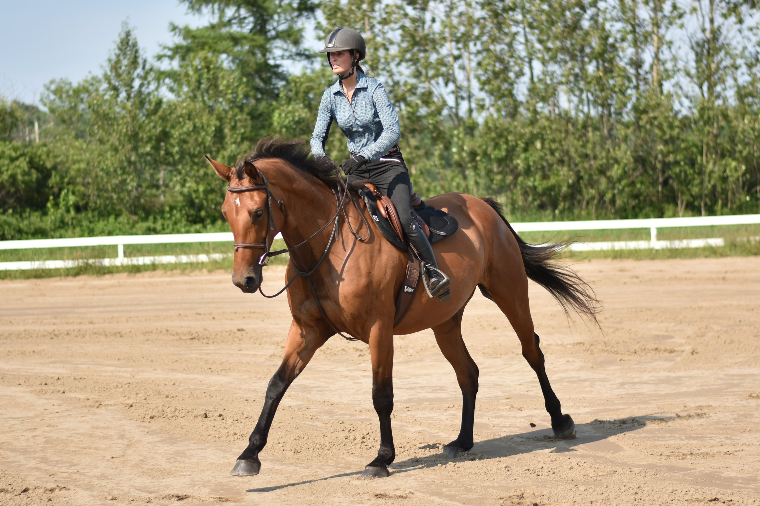 Are you looking for a place to train your youngster ou your experienced horse ?