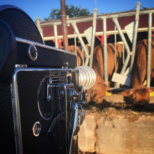 Some days, my job is hard. I work for a university. The beaurocracy and pace of the slow, lumbering machine can kill tiny dreams. Schedules get delayed. There are academic politics to keep in mind. Some days I can't wear jeans. . . . And then some days, I get to shoot cows at sunrise on my 16mm Bolex. For work. I'm getting paid to do THIS. . . . And then I realize. Oh yeah, I f*cking love my job. . . . . . #bolex #bolexh16 #bolex16mm #bolexreflex #16mm #16mmfilm #filmcamera #150th #sesquicentennial #ohiostatecreative #agriculture #osu #ohiostate #bolexpaillard #kodakfilm #kodak16mm #kodaktrix #kodaktrixfilm #kodaktrixreversal