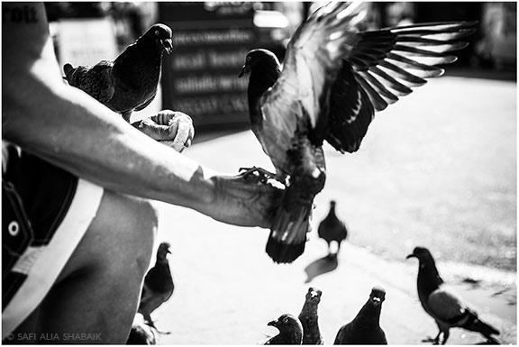 180811_©SafiAliaShabaik_Venice-Boardwalk_012-9_v1r_WEB-blog3.jpg