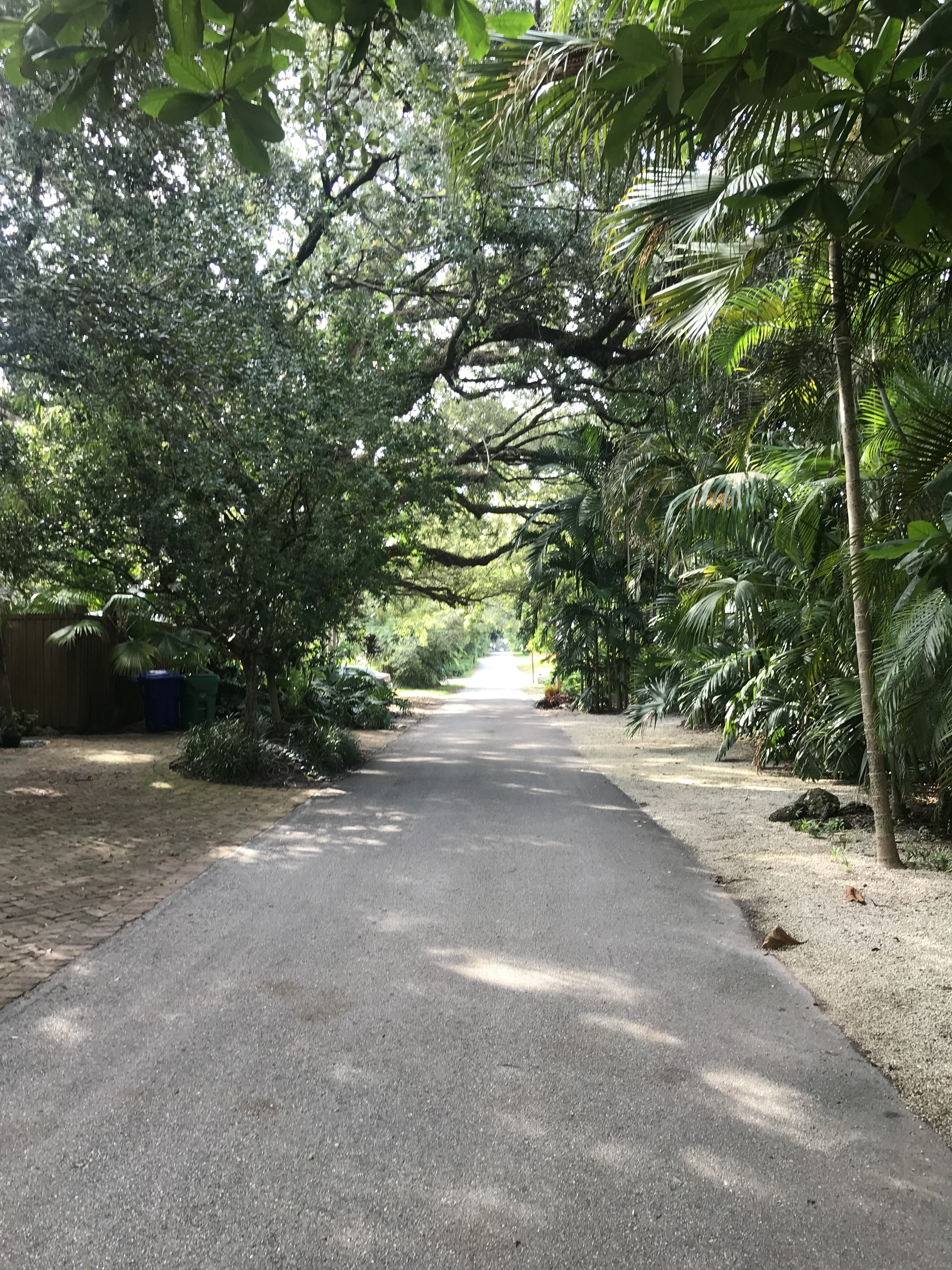 Canopied streets in the Grove.
