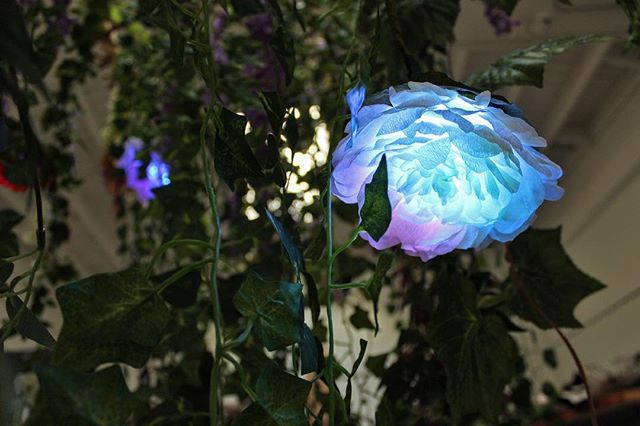 Helloooo spring! 🌸💐🌼 #flowerlight #glowingflower #ledflower #crepepaper #rose #lightart #bayareaartist #sfart #blackprismart #paperflowers #vines #hanginggardens