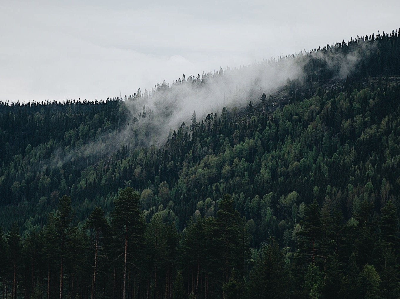 Jord og skog -