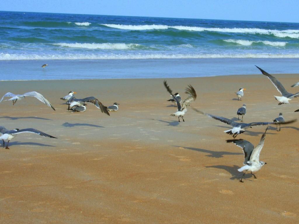 beach at condo.jpg