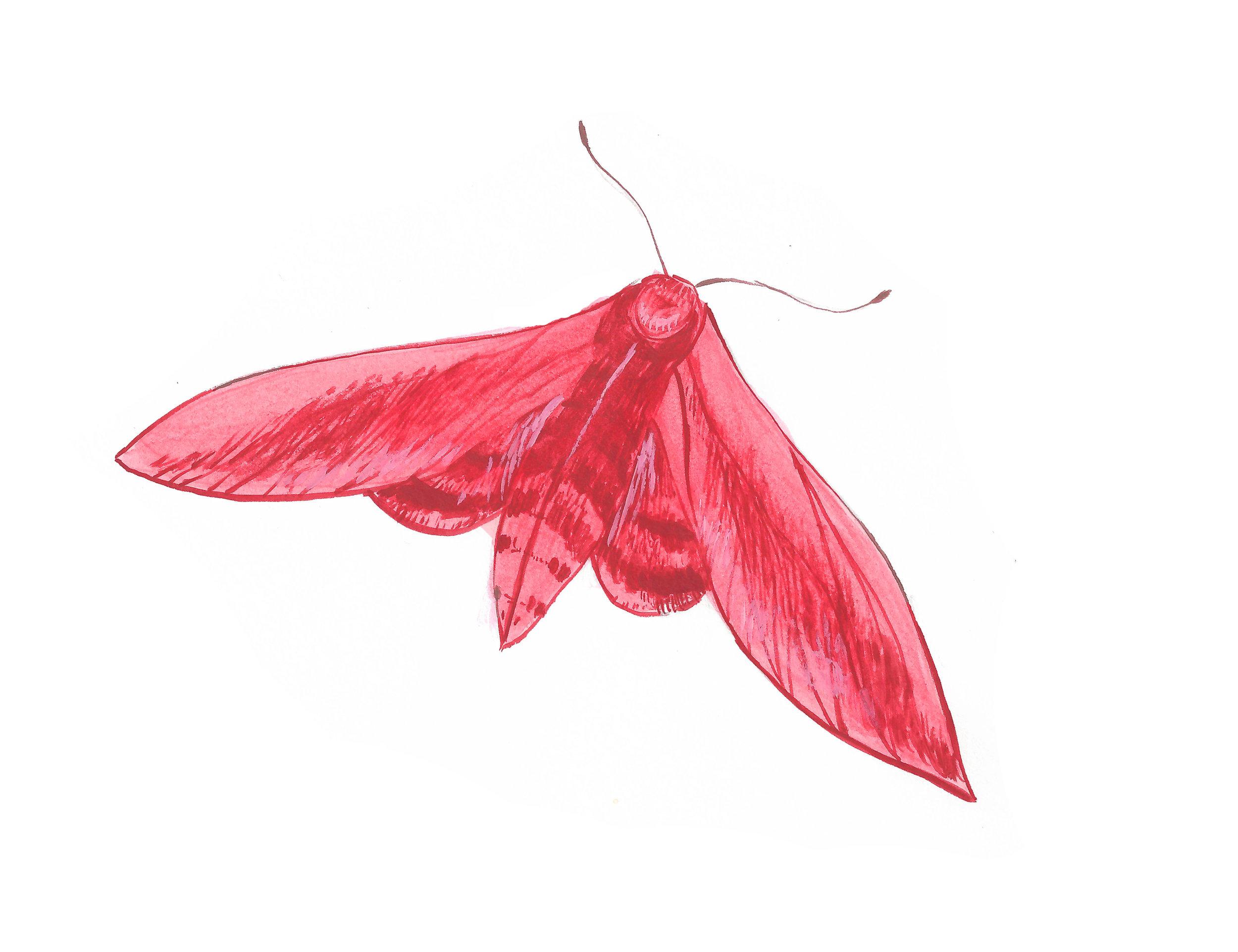 merkai moth promotion.jpg