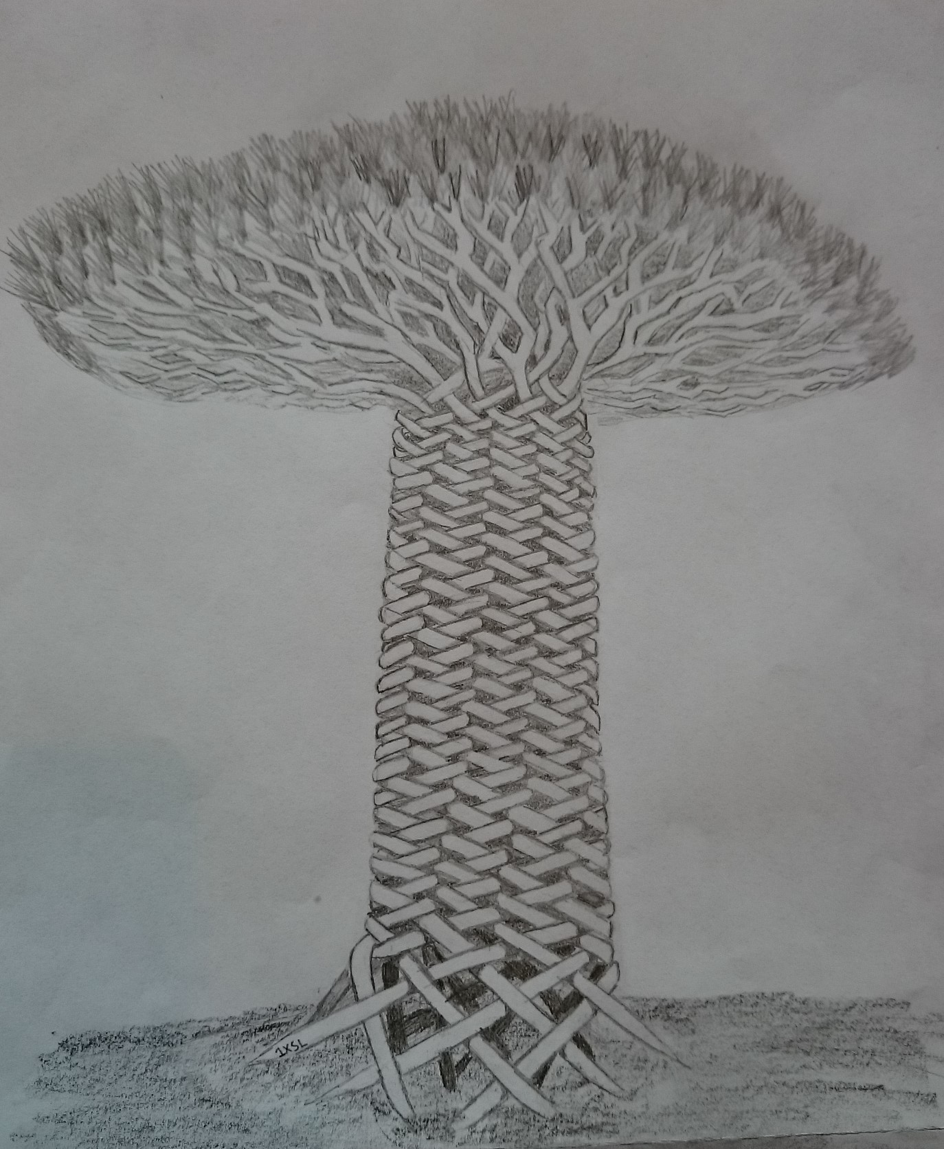 An incredibly detailed grey and white drawing of Jorbam, proud and tall, all her roots weaving together like an elaborate rope to form her branchless trunk, effortlessly blooming into a wide canopy topped with spiney leaves. By LM.