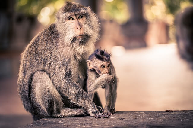 Bali - hang out with monkeys in Ubud