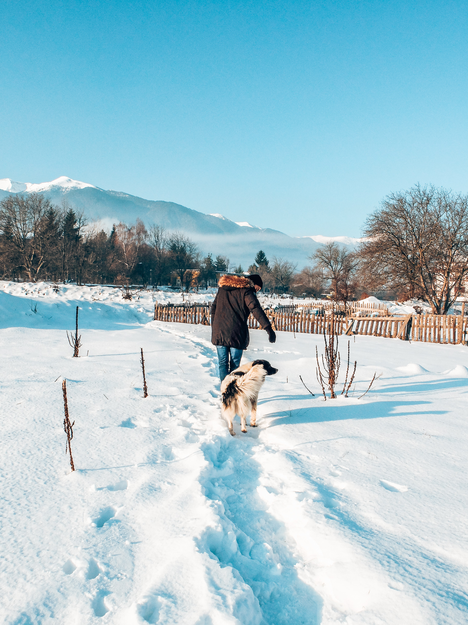 Man and dog walking in snowy mountains
