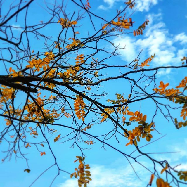 """Trees are poems that earth writes upon the sky, We fell them down and turn them into paper, That we may record our emptiness."" - Khalil Gibran . . . . . #clouds #falltime #beautiful #amazing #fall #nature #colorful #orange #red #season #autumn #cold #beauty #seasons #warm #instaautumn #foliage #tree #trees #autumnweather #study #instagood #photooftheday #instafall #TFLers #fallweather #leaf #color #leaves"