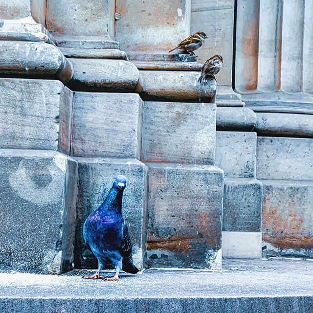 """To me, photography is an art of observation. It's about finding something interesting in an ordinary place… I've found it has little to do with the things you see and everything to do with the way you see them."" - Elliott Erwitt . What do you see in this photo? . . . #posing #birdsofinstagram #instabirds #melbournestreetart #melbournemodel #photomodel #featheredfriends #urban #streetphotography #streetarteverywhere #urbanwalls"