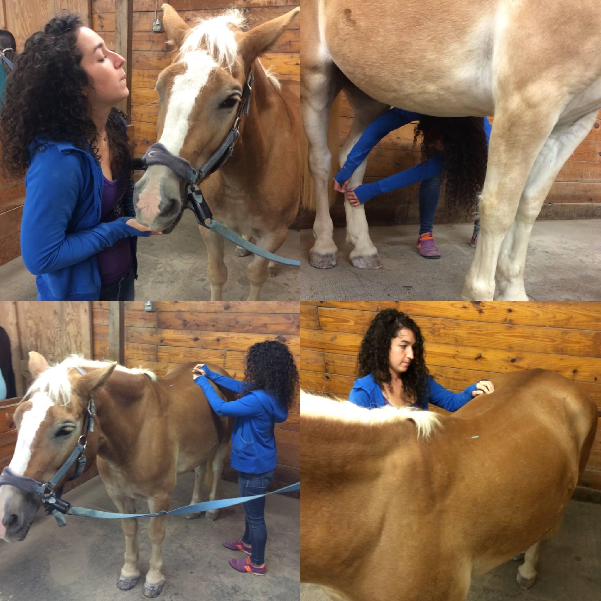Andrea Brand animal accupuncturist