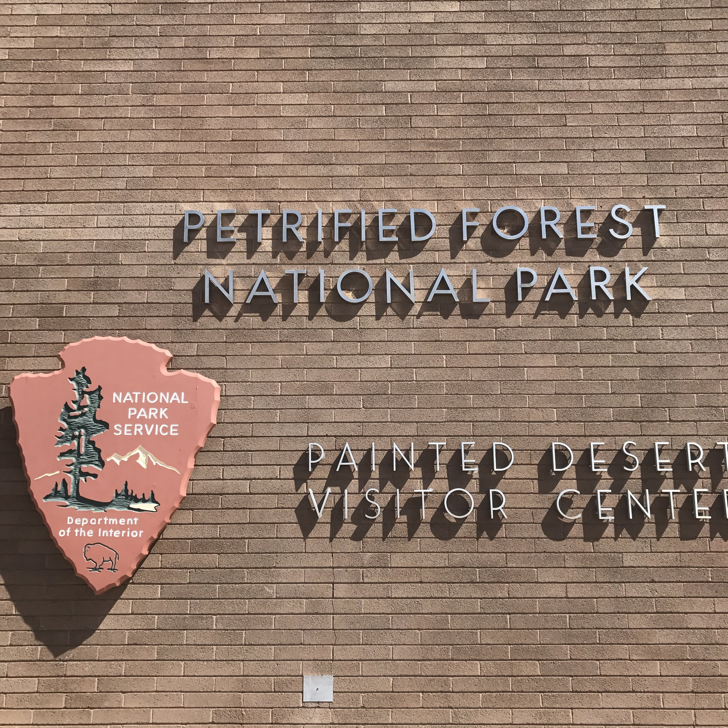 petrified forest copy.JPG