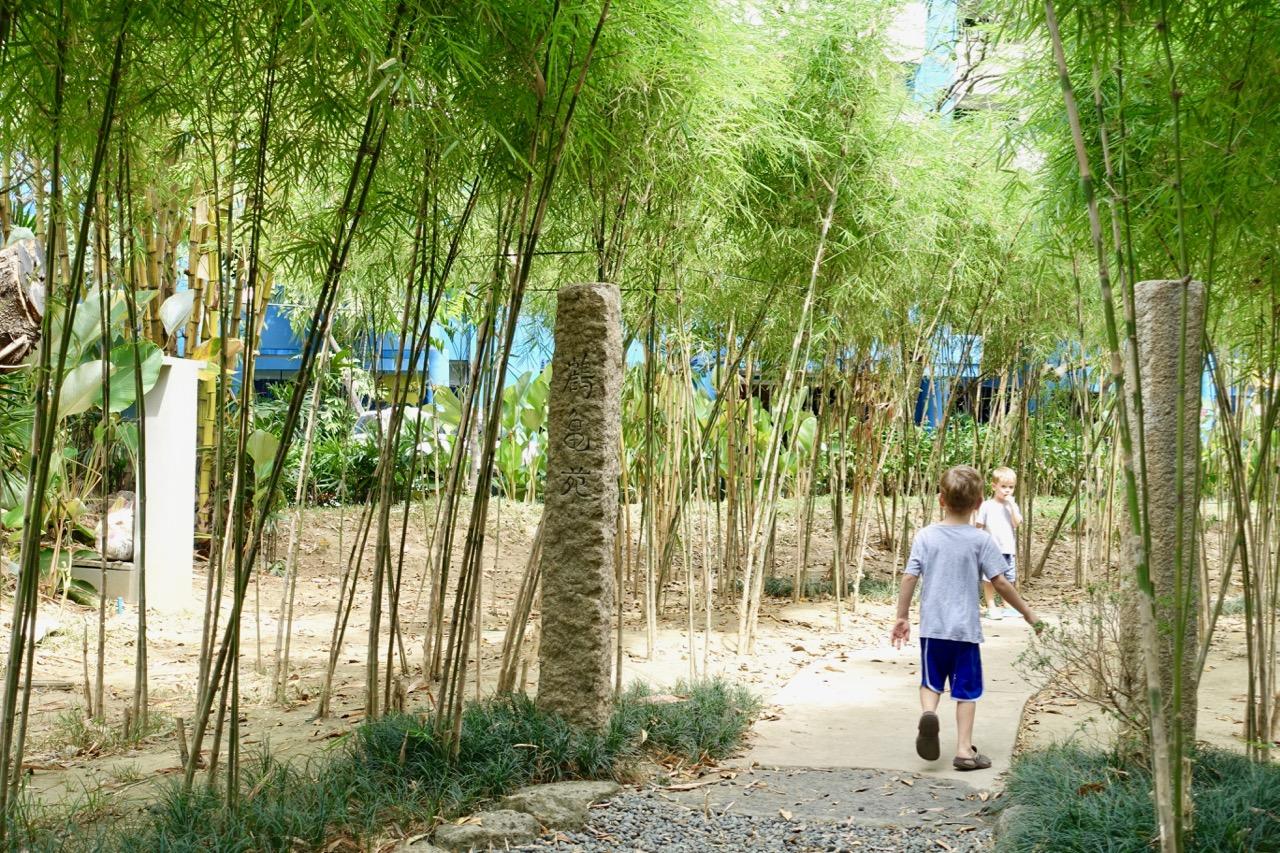 bamboolll.jpg