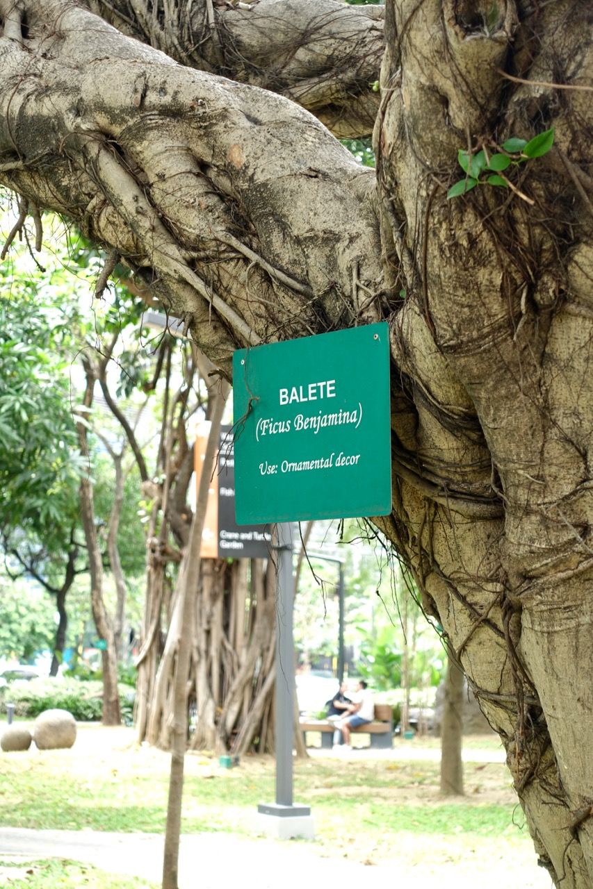 tree names l.jpg