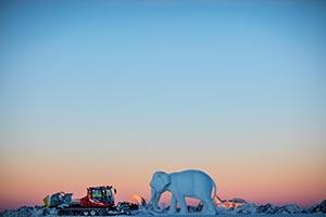 Senatswahl mit Elephant Pollux © Ernste Lorenzi