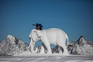 Senatswahl mit Elephant Pollux © Ernst Lorenzi