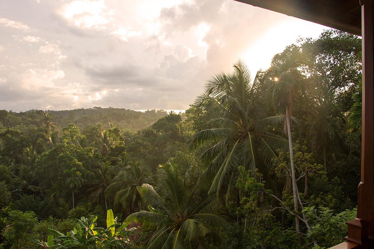 view from balcony shala room .jpg