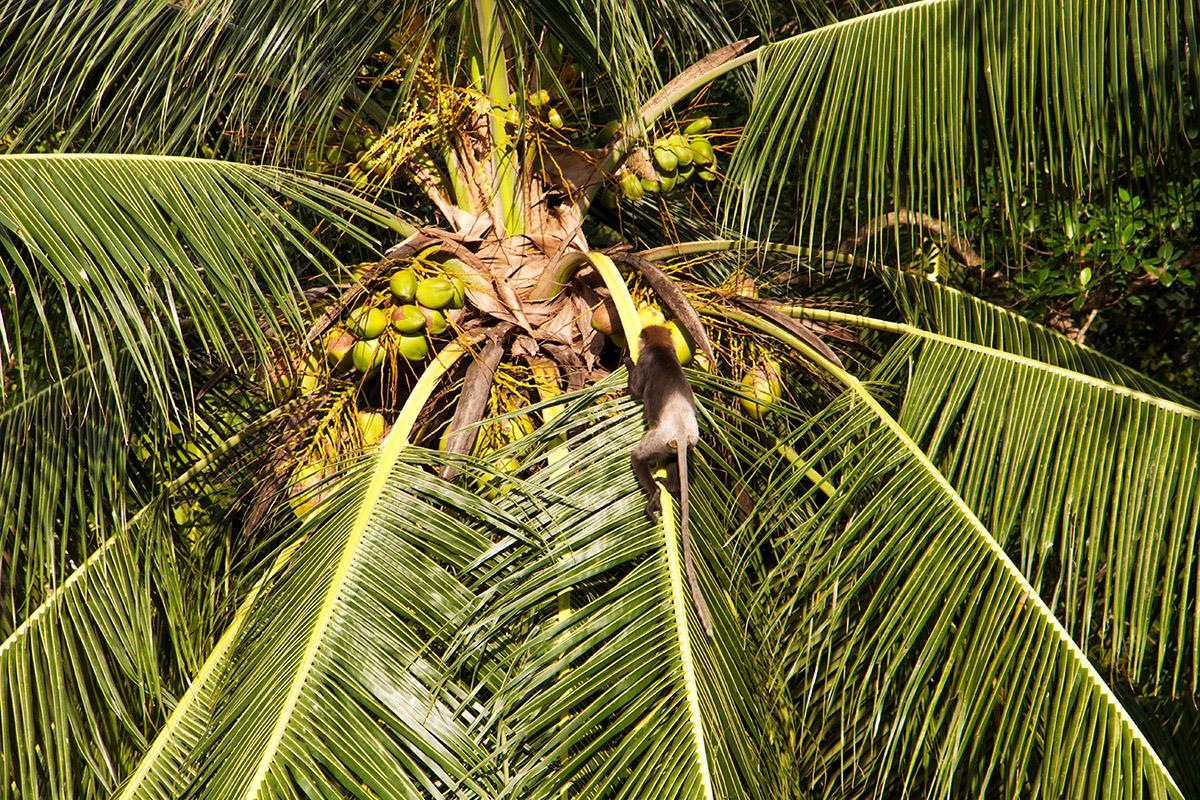 monkey in palmtree shala room.jpg