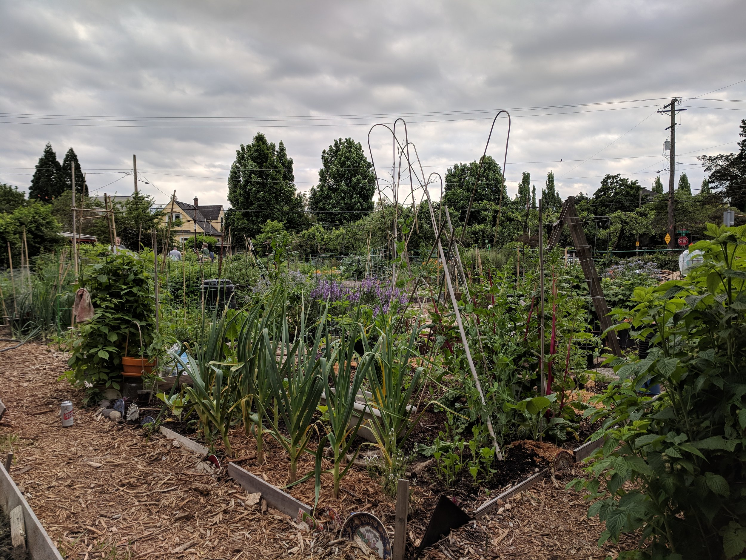 Our community garden plot in mid-May 2018