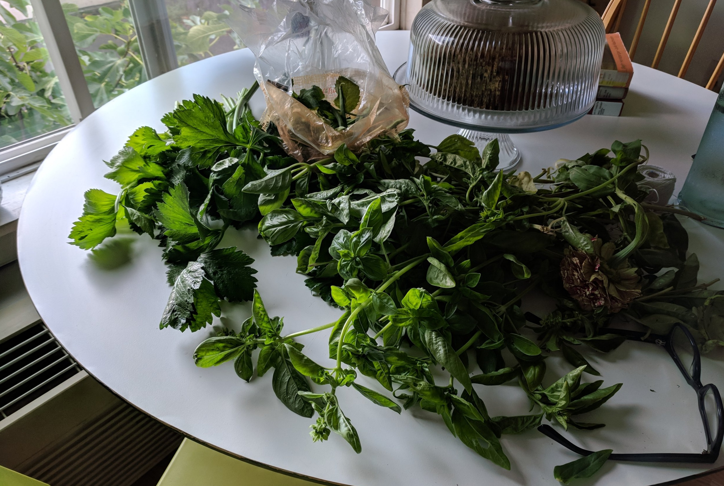 The more realistic basil situation, I mean, harvest, a few days later