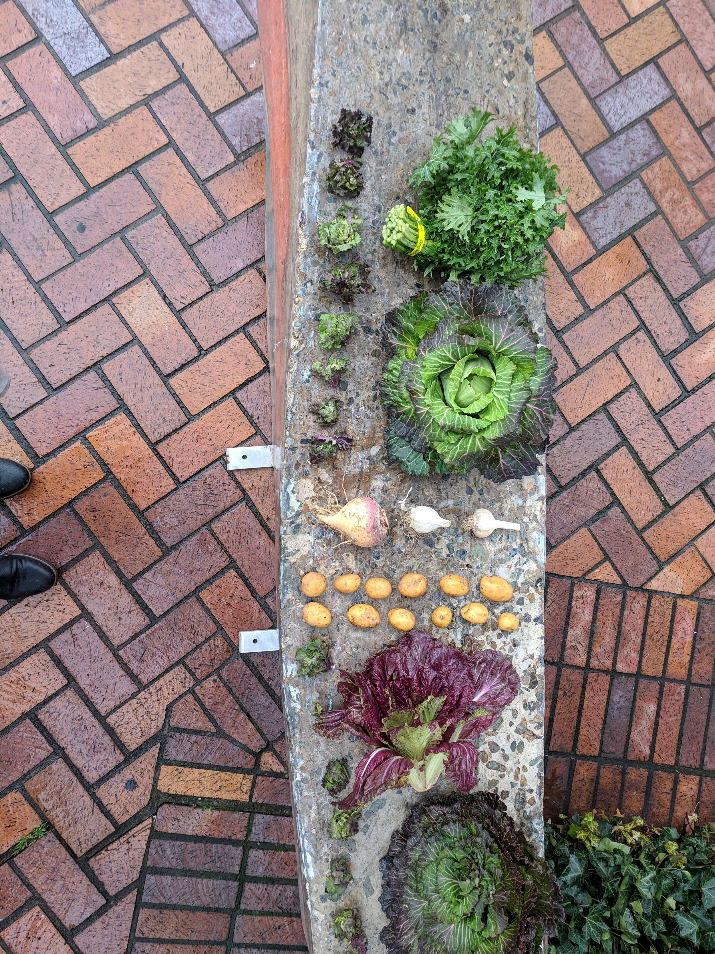 girl meets cabbage, february 16, 2019, circa portland farmers market @ psu