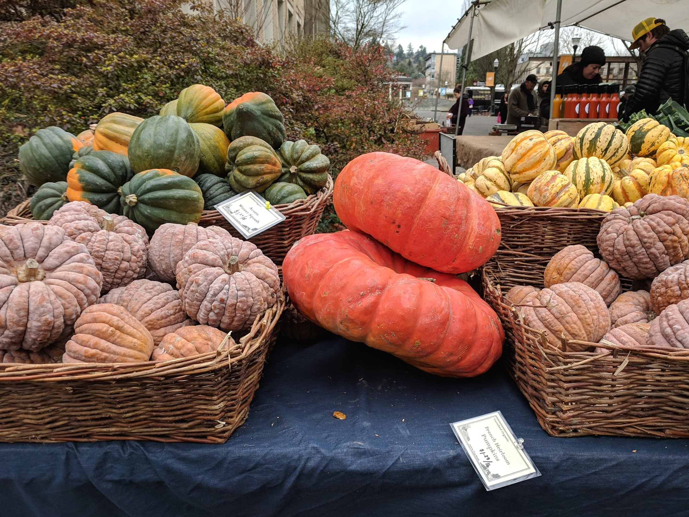Winter squash bounty at one of Portland's many farmers market (I forget which…)