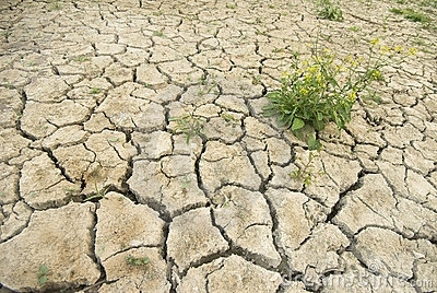 dry-cracked-ground-green-plant-4516082.jpg