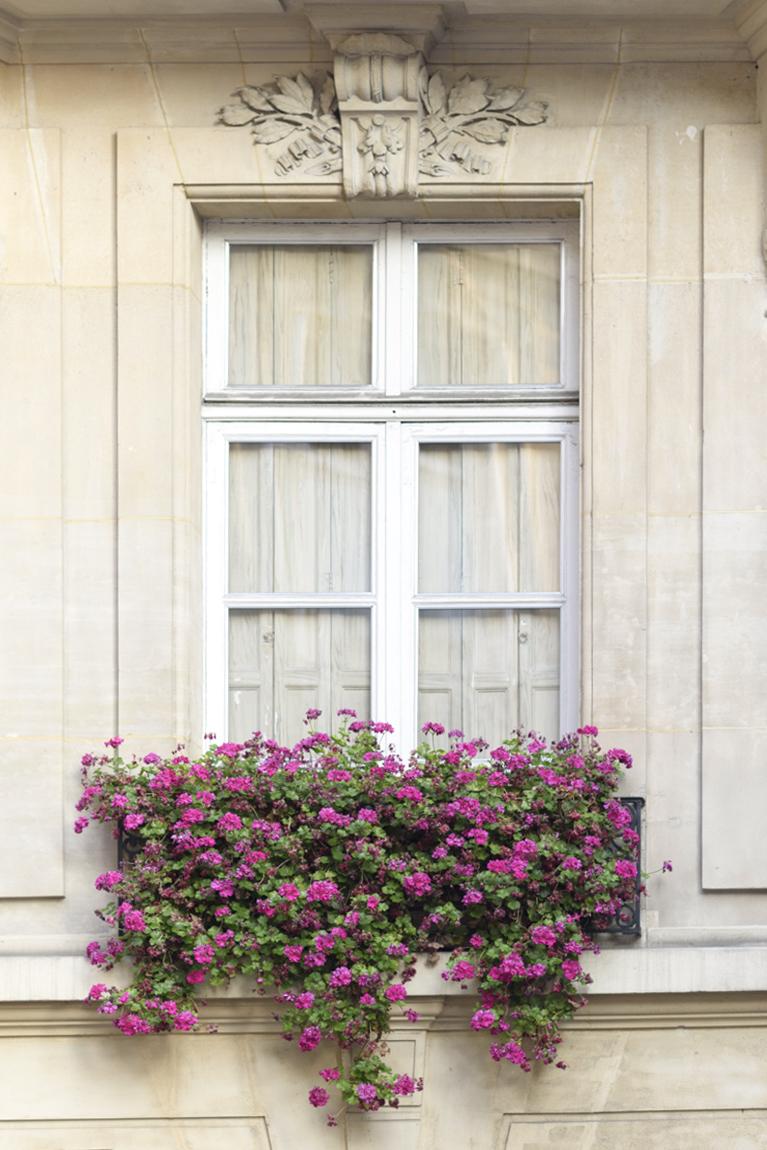 Window and Geraniums